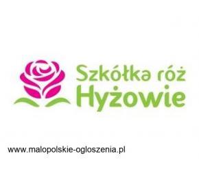 Sadzonki róż | Hyzowie.com