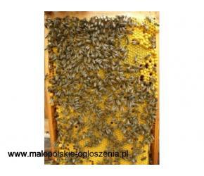 Pszczoły z ulem,  pasieka
